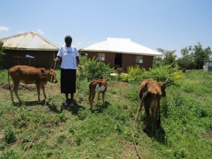 Beneficiary of the heifer project