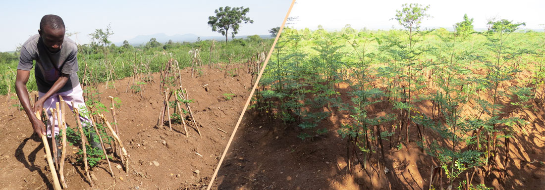 MORINGA-PROJECT1
